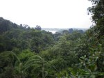 View over MacRitchie Park
