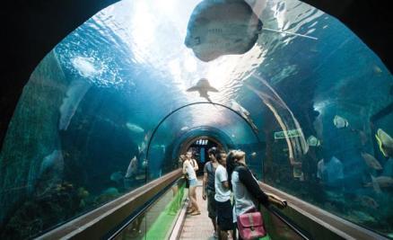 phuket_aquarium_02