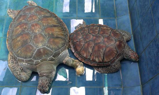 phuket_aquarium_03