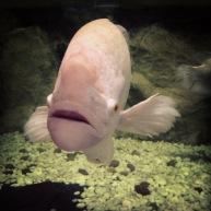 phuket_aquarium_05