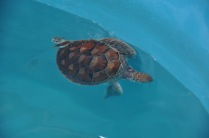 03. Turtle Release - nursery