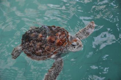 05. Turtle Release - nursery