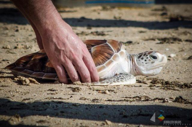 10. Turtle Release