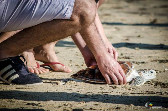 12. Turtle Release
