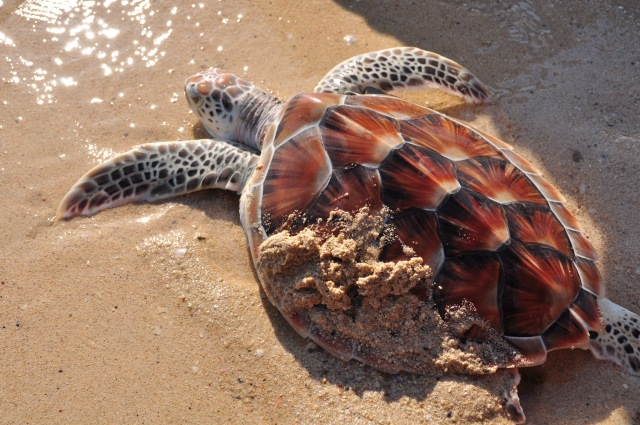 13. Turtle Release
