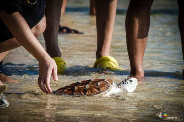 15. Turtle Release