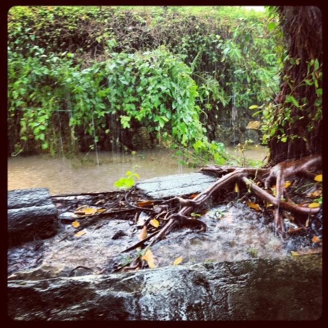 145. Rainy Season_02